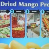 Preda Fair Trade Mango's